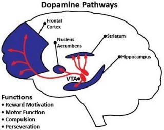 Dopamine pathways video games